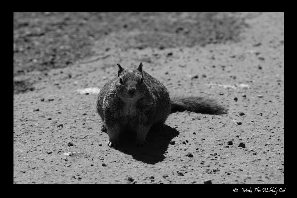 squirrel copy right 5
