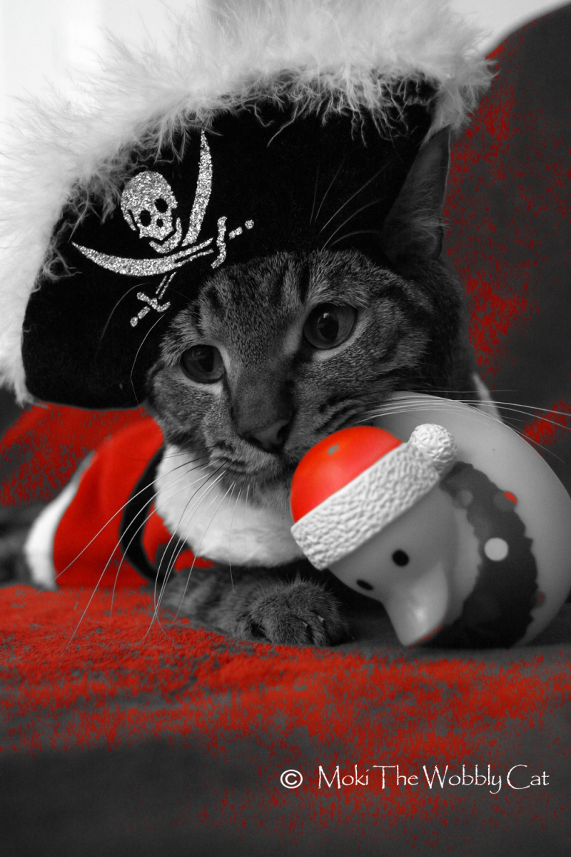 Christmas Pirate 2